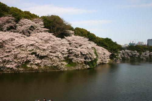 chidori2011.jpg